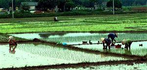 Thanh Thủy phấn đấu hoàn thành mục tiêu phát triển kinh tế - xã hội năm 2019