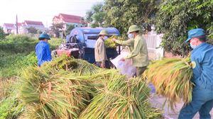 Hội Nông dân tổ chức gặt lúa giúp các hộ gia đình bị cách ly tại Khu 7 xã Tân Phương