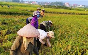 Hội Phụ nữ xã Đồng Trung tổ chức gặt cho gia đình bà Quyết Thị Cam