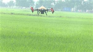 Thanh Thủy làm điểm phun thuốc trừ sâu bằng máy bay không người lái