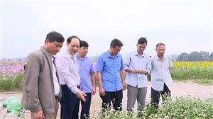 Lãnh đạo Sở Nông nghiệp & Phát triển nông thôn tỉnh thăm mô hình trồng hoa tại Đồng Trung