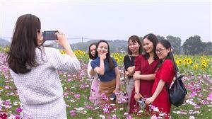 Trồng hoa làm du lịch - hướng đi mới của người nông dân