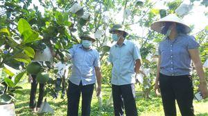 Đồng chí Phó Bí thư Thường trực Huyện ủy thăm mô hình hợp tác xã kinh doanh bưởi Tu Vũ