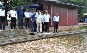 """Phó Chủ tịch UBND tỉnh Nguyễn Thanh Hải đi thăm mô hình nuôi cá """"sông trong ao"""" tại Thanh Thủy"""
