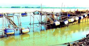 Người chăn nuôi cá lồng trên sông Đà bị ảnh hưởng bởi nước cạn
