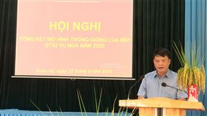UBND huyện Thanh Thủy tổng kết mô hình trồng giống lúa nếp ĐT52 vụ Mùa năm 2020