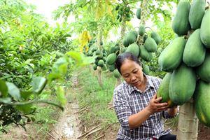 Đoan Hạ tập trung chuyển dịch cơ cấu cây trồng