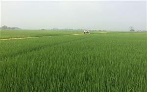 Dồn đổi ruộng đất ở Đoan Hạ thành công từ ý Đảng, lòng dân