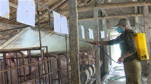 Thanh Thủy chủ động phòng, chống dịch tả lợn châu Phi