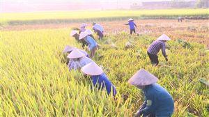 Nghĩa tình mùa gặt