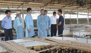 Thứ trưởng Bộ NN&PTNT Phùng Đức Tiến làm việc tại tỉnh