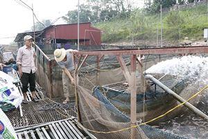 Để nuôi cá lồng an toàn, hiệu quả