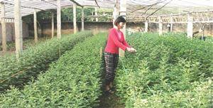 Thanh Thủy: Để phát triển làng nghề bền vững