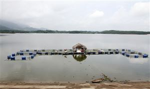 Đồng bào dân tộc thiểu số góp phần thúc đẩy phát triển kinh tế - xã hội ở Thanh Thủy