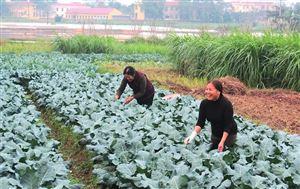 Thanh Thủy dạy nghề cho nông dân