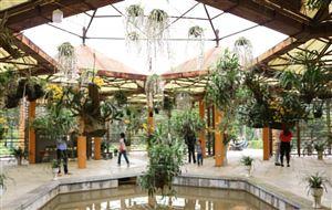 Phong lan khoe sắc tại Lễ hội Đền Hùng