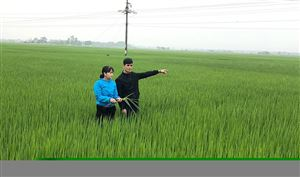 Dồn đổi ruộng đất để nâng cao hiệu quả  sản xuất ở Thanh Thủy