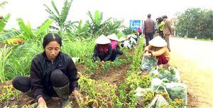 Hội LHPN tỉnh Phú Thọ hỗ trợ mô hình con đường hoa tại xã Trung Nghĩa