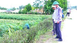 Thạch Đồng tổ chức trồng và chăm sóc đường hoa dọc tỉnh lộ 316