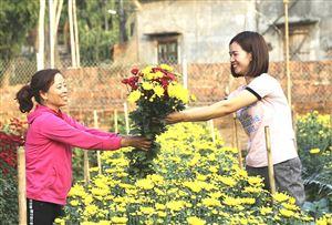 Xuân về trên những làng hoa